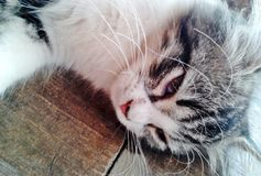 Close up of cat`s whisker.  royalty free stock images