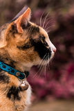Close up Cat (Side) photography Stock Photography