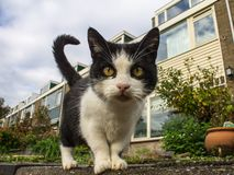 Close up cat on the street stock photography