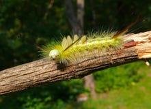 Close-up of Caterpillar 20 Stock Image