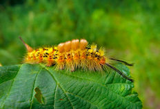 Close-up of Caterpillar 3 Royalty Free Stock Image