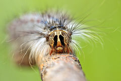 Close-up of caterpillar's head Stock Photo