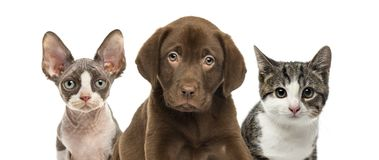 Close-up of cats and dog. Isolated on white Stock Photos