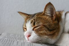 Cats lying on the newspaper. Close up of Cats lying on the newspaper royalty free stock photography
