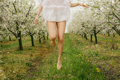 Close up of Caucasian woman jumping barefoot in blooming orchard. Close up of Caucasian woman wearing white dress, jumping barefoot in white blooming orchard Royalty Free Stock Image