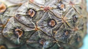 Close-up of cedar cone bark. Organic natural bark of pine cones with texture of wood cells. Close-up shot of bark cones. With all detailed cuts stock video footage