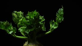 Celery root in rotation. Close Up of Celery root with leaves in rotation on a black background. Studio shot. Macro. Apium graveolens stock video footage