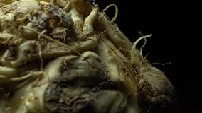 Celery root in rotation. Close Up of Celery root in rotation on a black background. Studio shot. Macro stock video footage