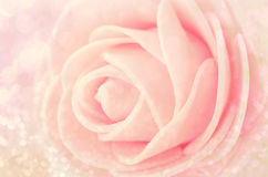 Close up Center Sepia Pink Roses. Stock Photo
