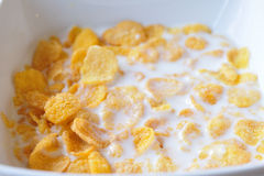 Close up Cereals with fresh milks in bowl. Stock Photo