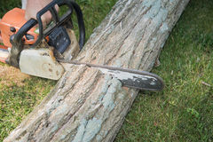 Close up of chain saw with motion blur cutting fallen tree Stock Photos
