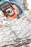 Close-up of chainsaw cutting trees and firewood for winter Stock Image