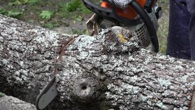 Close up chainsaw cutting wood tree trunk. stock video