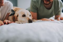 Close up of a cheerful young couple resting with their dog stock photography
