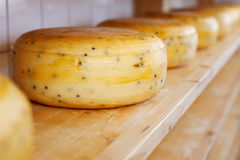 Close-up of cheese-wheels maturing on shelves Royalty Free Stock Photos