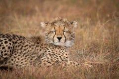 Close-up of cheetah cub with eyes closed stock photo
