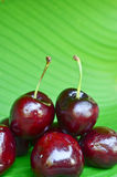 Close up cherries Royalty Free Stock Image