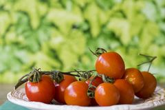 Fresh red cherry or ramano tomatoes on white plate in garden, against green leaf background. Space for text stock image