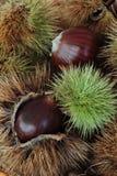 Close up of chestnut fruit Stock Photos