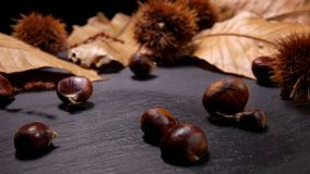 Chestnuts fall on a black stone board stock video footage