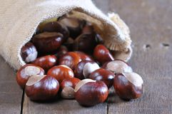 Close-up of chestnuts scattered on wooden table Stock Photos