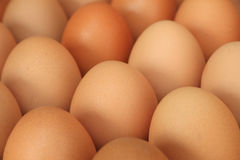 Close up of chicken eggs Royalty Free Stock Photo