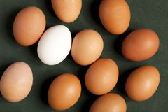 Close-up of chicken eggs protein, brown and white egg on green background. Close-up view of raw chicken eggs in box, egg white, egg brown on green background stock photography