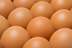 Chicken eggs in tray Stock Images