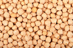 Close up of chickpea Stock Images