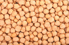 Close up of chickpea Stock Image