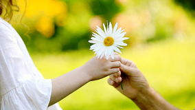 Close-up, the child gives the daisy to the grandfather. stock footage