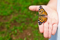 Close up of child holding butterfly Stock Photography