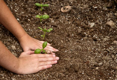 Close-up of child planting a small plant Stock Photography