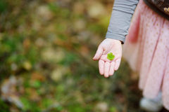 Close up of child`s hand holding wood sorrel leaf Royalty Free Stock Photography