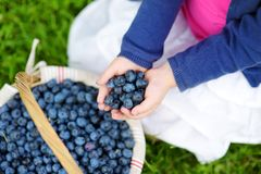 Close-up of childs hands holding fresh blueberries Stock Image