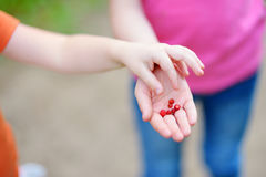 Close-up of childs hands holding fresh wild strawberries picked at organic farm Royalty Free Stock Photos