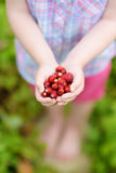 Close-up of childs hands holding fresh wild strawberries picked at organic farm Royalty Free Stock Images