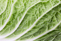 Close up of Chinese cabbage Stock Photography