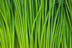 Close up of chives Stock Image