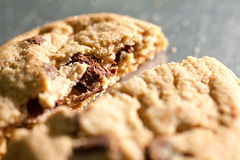 Close up of chocolate chip cookie. In the morning sunlight Stock Photography