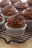 Close up of chocolate cupcakes with chocolate frosting Royalty Free Stock Photo