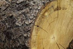 Close-up of chopped tree stump Stock Photography
