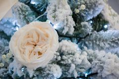 Close Up Of Christmas Snowy Tree Flower Decoration. On Snowy Background Royalty Free Stock Images