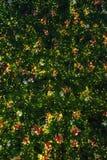 Close-up Christmas tree background Royalty Free Stock Photos