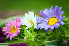 Close-up of Chrizantenum flowers Stock Images