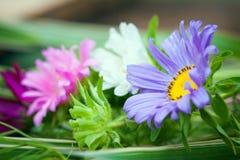 Close-up of Chrizantenum flowers Royalty Free Stock Image