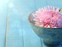 Close up of chrysanthemum flower in bowl Stock Photo