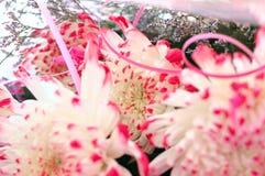 Close-up of chrysanthemum flowers. Stock Image