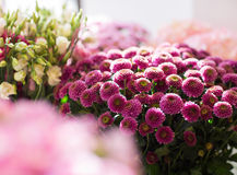 Close up of chrysanthemums at flower shop stock photo