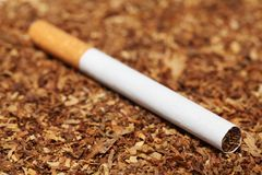 Close up of cigarette on tobacco Stock Image